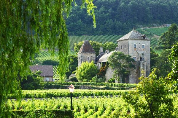 Vineyards in Gevre, France